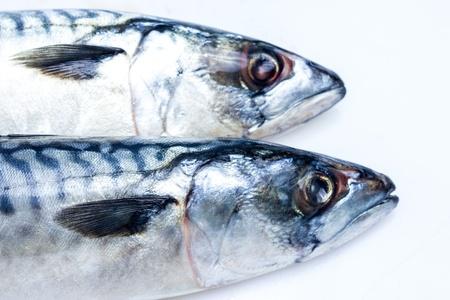 fish vendor: Two mackerel up close Stock Photo