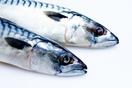 Two mackerel Stock Photo - 20165057