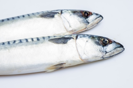 Two mackerel Stock Photo - 20165017