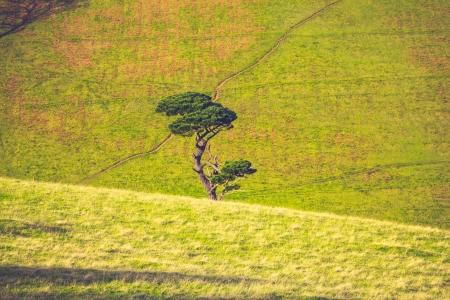 Single tree growing in a green meadow photo