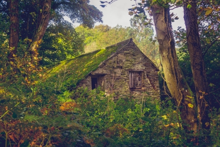 Old ruin of a cabin in the woods photo