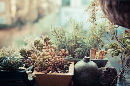 A small garden on a balcony in an urban setting