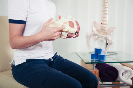 A physiotherapist is holding a model of a human pelvis Stock Photo