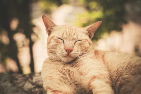 snoozing: A cat is sleeping on a rock outside