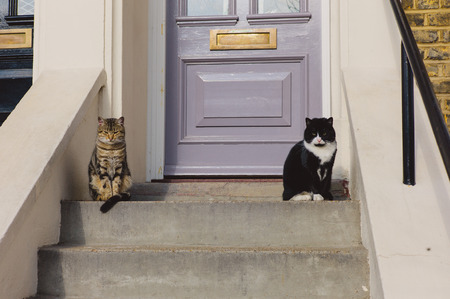 stoop: Two cute cats are sitting on the stoop outside a house