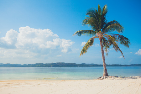 A single palm tree on a beautiful tropical beach with white sand