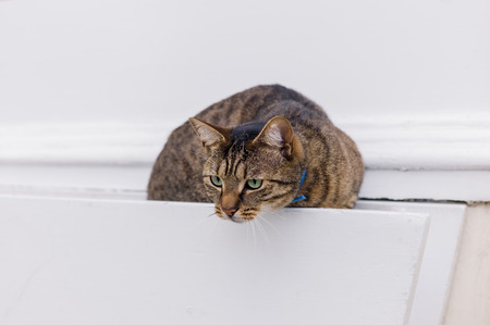 sneaky: A sneaky looking cat sitting in a hanging basket outside a house