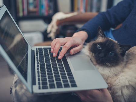 cats: A young woman is using her laptop at home with a cat sitting on her lap