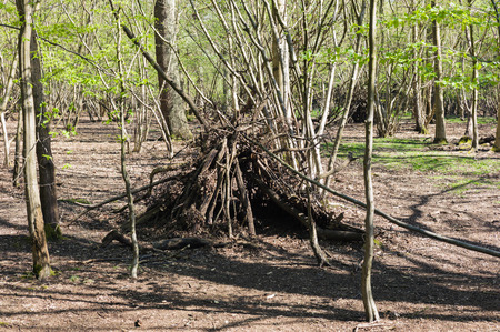 pollard willows: A poorly constructed wigwam in a forest
