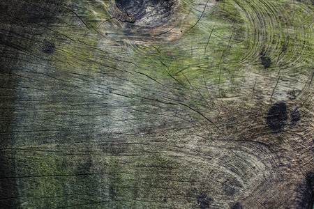 felled: Closeup on the rings of a large felled tree