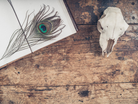 old desk: An old notebook with a peacock feather and a sheep skull on a wooden desk