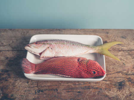 carribean: Two colorful exotic fish placed in a tray, a red butterfish and a Carribean snapper Stock Photo