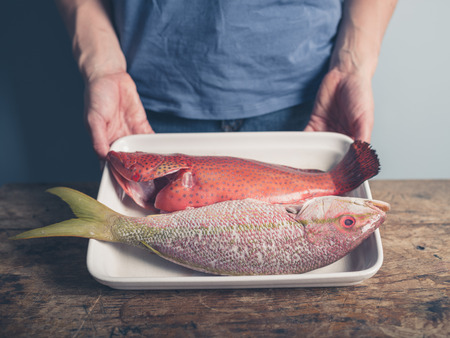 lunch tray: A young person is holding a tray at a table with two exotic fish in it Stock Photo