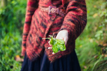foraging: A young woman is showing a handful of sorrel she has found foraging