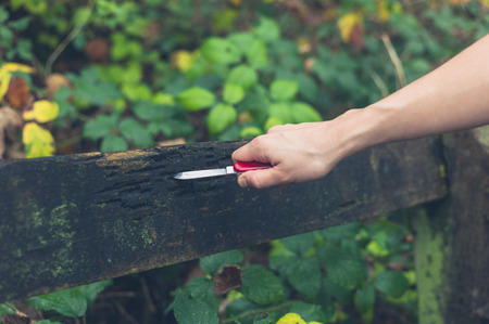 pocket knife: A young person is carving marks in a bench with a pocket knife