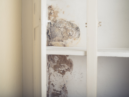 damp: A moldy and damp old fitted cupboard