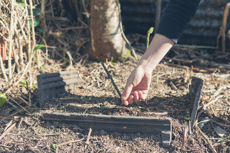 constricted: The hand of a woman planting a small tree Stock Photo