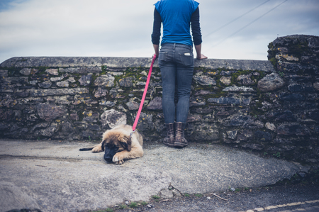 cobble: A young woman is standing by a small cobble wall with a Leonberger puppy