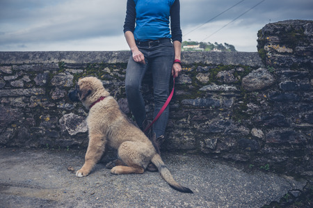 stitting: A young woman is standing by a small cobble wall with a Leonberger puppy