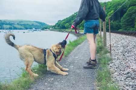 いたずらな犬は彼のひもを引っ張って、ほぼ湖に落下