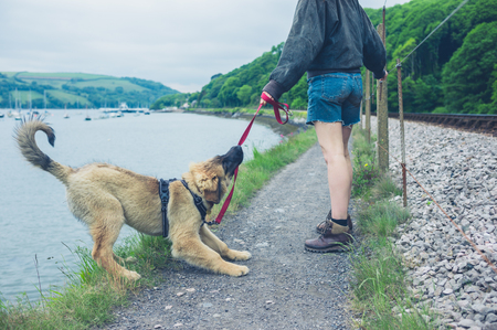A naughty dog is pulling on his leash and almost falling into a lake