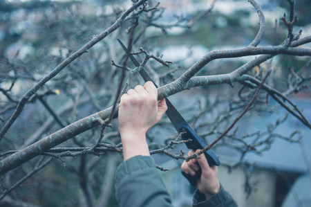 sawing: The hands of a young woman is sawing a tree branch Stock Photo