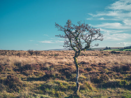 A lonely tree in the wilderness