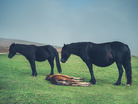 Some horses are standing in the fog on the moor
