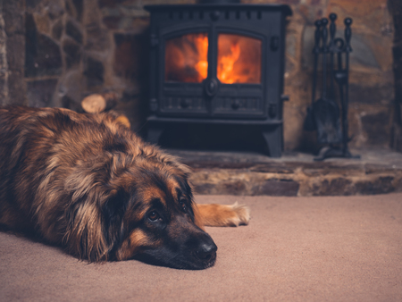 A big dog is relaxing by a fire in the log burner