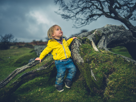 A little toddler is climbing a tree on the moor