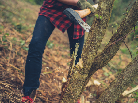 A young woman is cutting down a tree with an axe