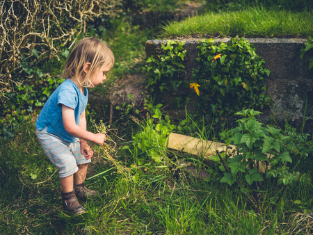 A little toddler is pulling up weeds in the garden Stock Photo