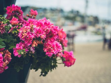 Flowers growing in a pot by the river in seaside town Stockfoto