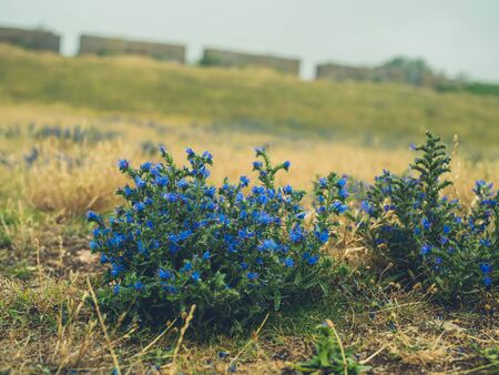 Blue flowers outdoors on a misty day