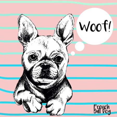 frenchie: Vector close up portrait of french bulldog. Hand drawn domestic pet dog illustration. Isolated on rose background with cerulean stripes. Illustration