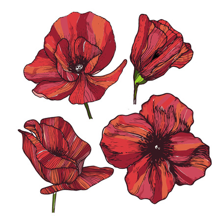 red line: Vector set of four highly vibrant red poppy flowers. Summer blossom hand drawn art. Use for greeting card, invitations, wallpaper, botanical medicine.