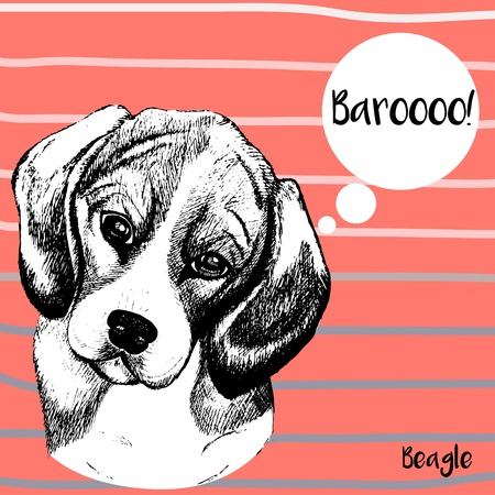 echo: Vector close up portrait of beagle dog. Hand drawn domestic pet dog illustration. Isolated on pantone Peach Echo background with rose and grey strips.