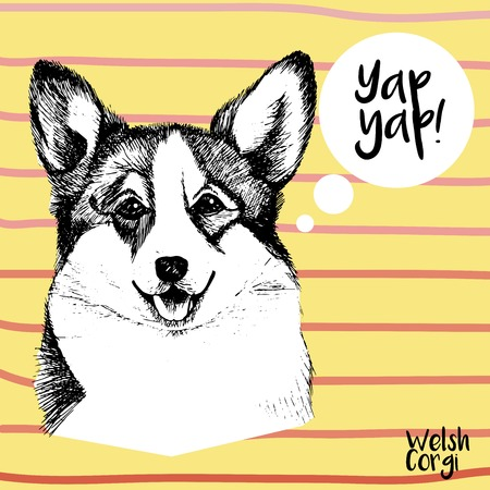 pembroke: Vector close up portrait of welsh corgi pembroke. Hand drawn domestic pet dog illustration. Isolated on yellow background with rose stripes.