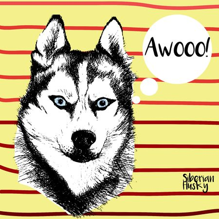 spitz: Vector close up portrait of siberian husky. Hand drawn domestic pet dog illustration. Isolated on yellow background with red stripes.