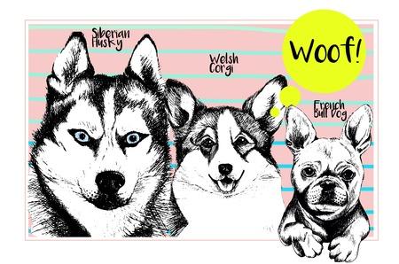 Vector conjunto de retratos de perros domésticos. husky siberiano, corgi galés, caras del dogo francés. Hnd ejemplo dibujado perro. Perrito divertido amigos.