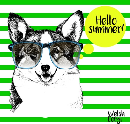 pembroke: Vector close up portrait of welsh corgi pembroke wearing the sunglassess. Bright hello summer corgi portrait. Hand drawn domestic pet dog illustration. Isolated on background with green stripes.