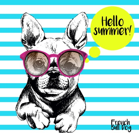 Vector close up portrait of french bulldog wearing the sunglassess. Bright hello summer french bulldog portrait. Hand drawn domestic pet dog illustration. Isolated on background with cerulean stripes.