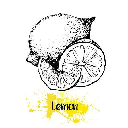 zest: Vector hand drawn illustration of lemon or lime fruit. Engraving summer fresh citrus fruit isolated on white background. For cocktail, smoothie, desserts and salsds. Illustration