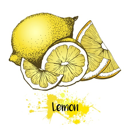 zest: Vector hand drawn illustration of lemon or lime fruit. Yellow color summer fresh citrus fruit isolated on white background. For cocktail, smoothie, desserts and salsds.