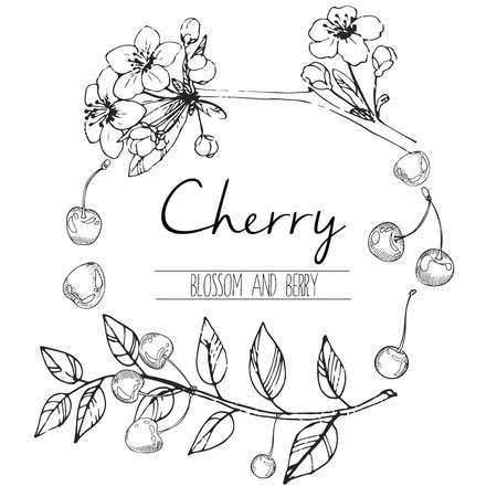 black branch: Vector round illustration of cherry blossom and berries. Hand drawn black and white engraved art in round border composition. Summer food for smoothie, cocktails, desserts and confectionery.