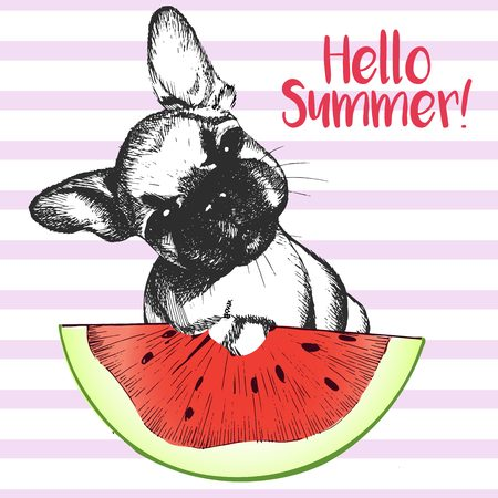 frenchie: Vector hand drawn illustration of frewnch bulldog puppy dog eating the watermelon slice. Hello summer. Isolated on light green strips. fresh fashion vibrant summer poster.