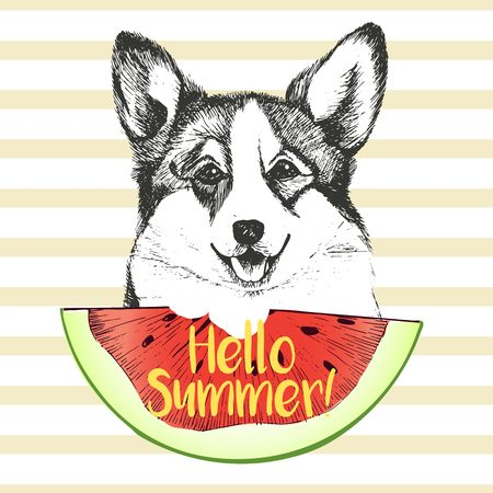pembroke: Vector hand drawn illustration of welsh corgi pembroke dog eating the watermelon slice. Hello summer. Isolated on light green strips. fresh fashion vibrant summer poster.