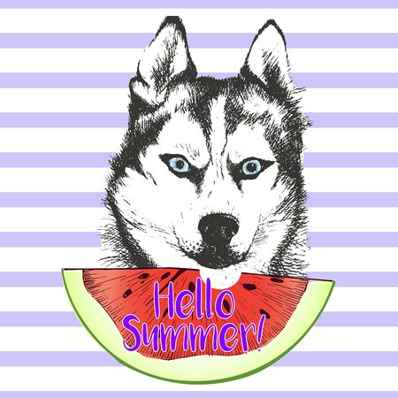 alaskan: Vector hand drawn illustration of siberian husky or alaskan malamute  dog eating the watermelon slice. Hello summer. Isolated on light green strips. fresh fashion vibrant summer poster.