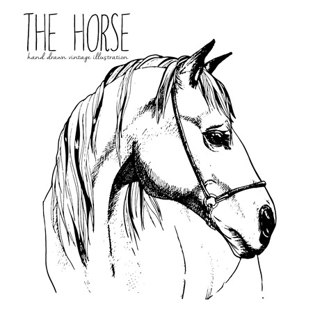 Vector portrait of the horse. Hand drawn vintage style illustration. Isolated on white background. Engraved style stallion head drawing. Vettoriali