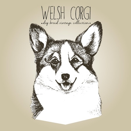 pembroke: Vector close up portrait of welsh corgi pembroke. Hand drawn domestic pet dog illustration in shebby vintage style. Isolated on craft brown background. Illustration